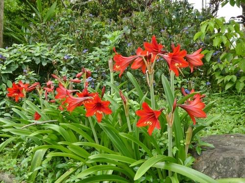 佐喜眞美術館の庭